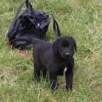 Hunde Vermittelt 2013 Hunde Vermittelt 2013 Tierschutzverein Weil Am Rhein E V