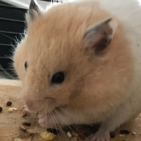 Fundhamster