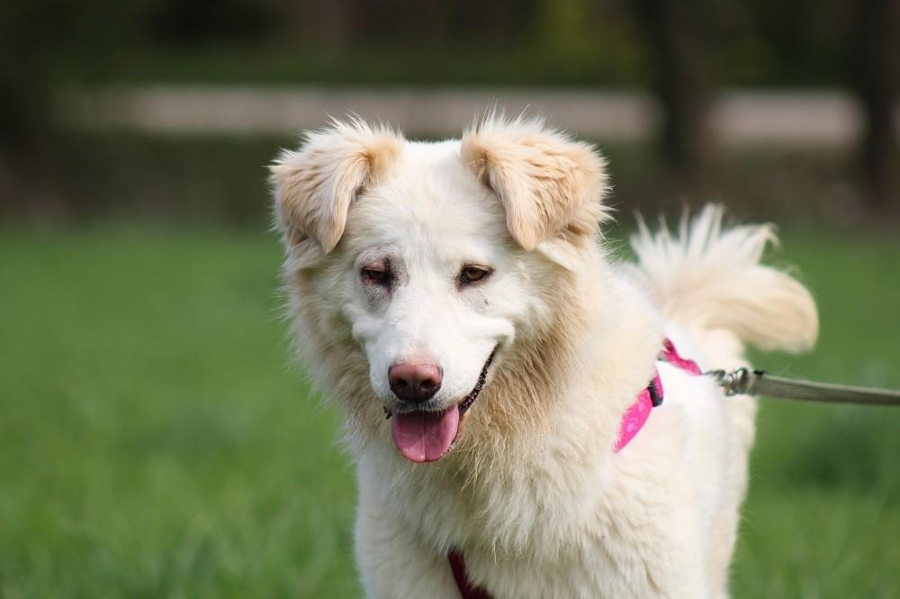 Schaferhund Podenco Mix Zowye Hundin Zuhause Gefunden Tierhilfe Malaga Happy Ends Archiv Von Zergportal De