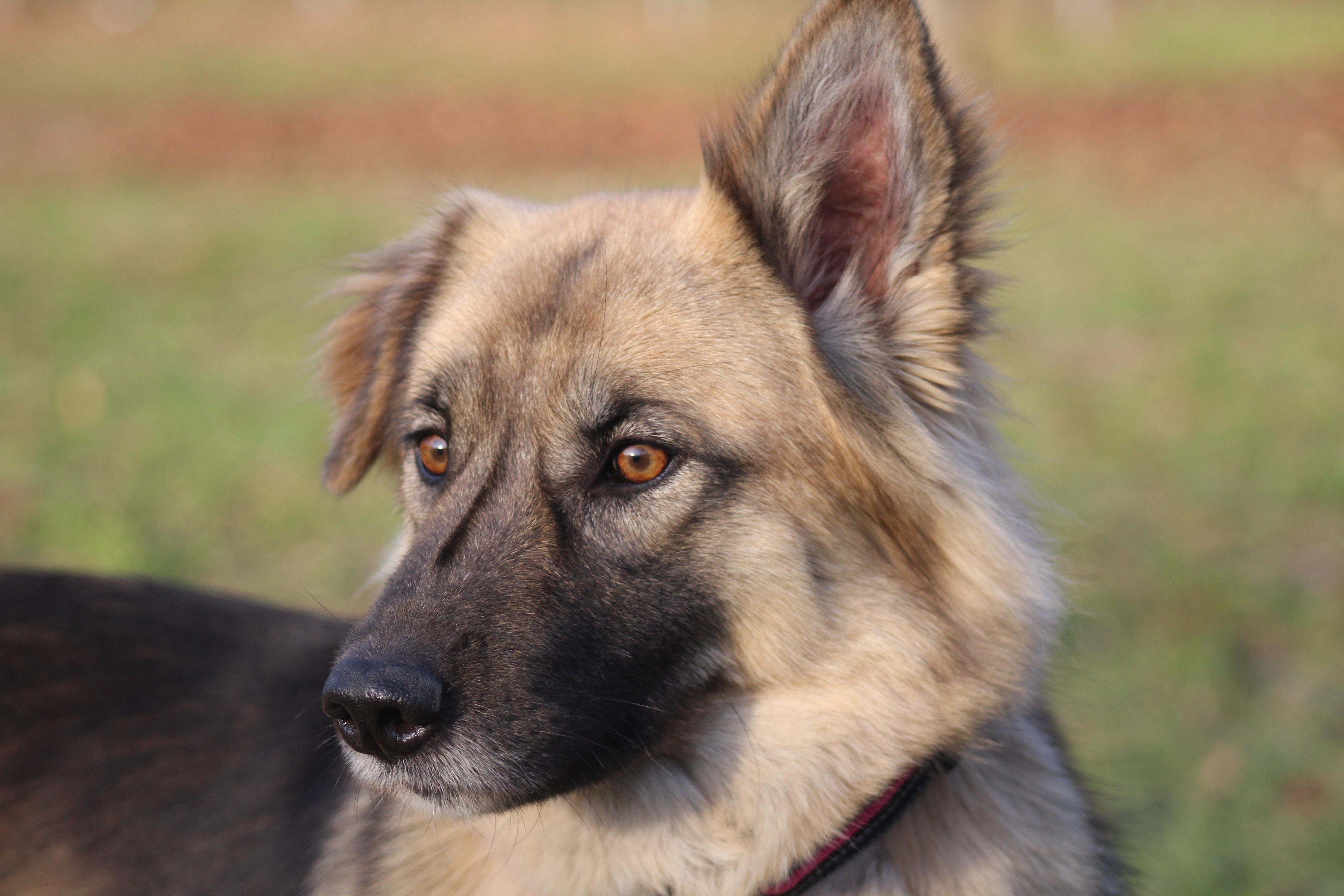 Murmel (Chow-Chow - Mischling, 5 Jahre 6 Monate) - Hunde ...  Murmel (Chow-Ch...